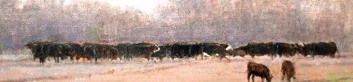 fredericksburg-cows